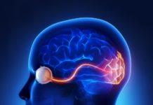взаимосвязь глаза и мозга